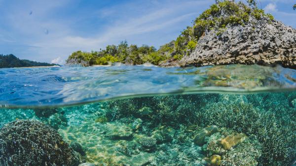 La Armada Nacional y la UAM celebran el Día Mundial de los Océanos con la Cátedra Marino fluvial