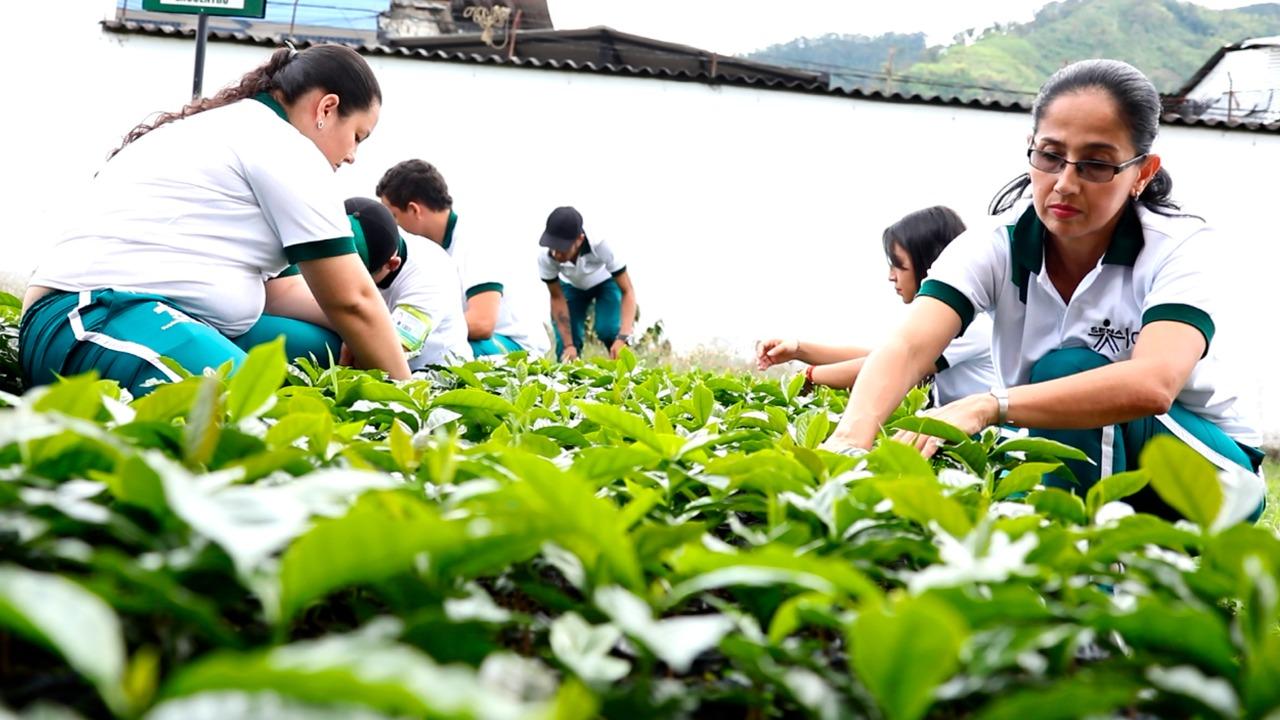 El SENA realizará Primer Simposio Mundial de la Cadena Productiva del Café