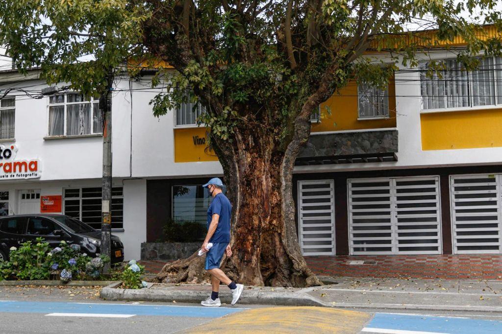 Después de socializarlo con la comunidad, la Secretaría de Medio Ambiente retirará cuatro árboles muertos de Milán