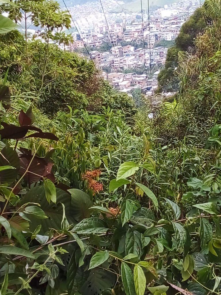 Poda de árboles cercanos a cuerdas de alta tensión en varios puntos de la ciudad, autorizada a la CHEC