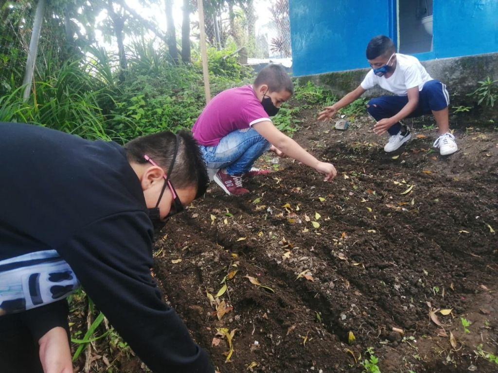 Programa Huertas Saludables, de la Secretaría de Agricultura, beneficio saludable para 100 familias campesinas
