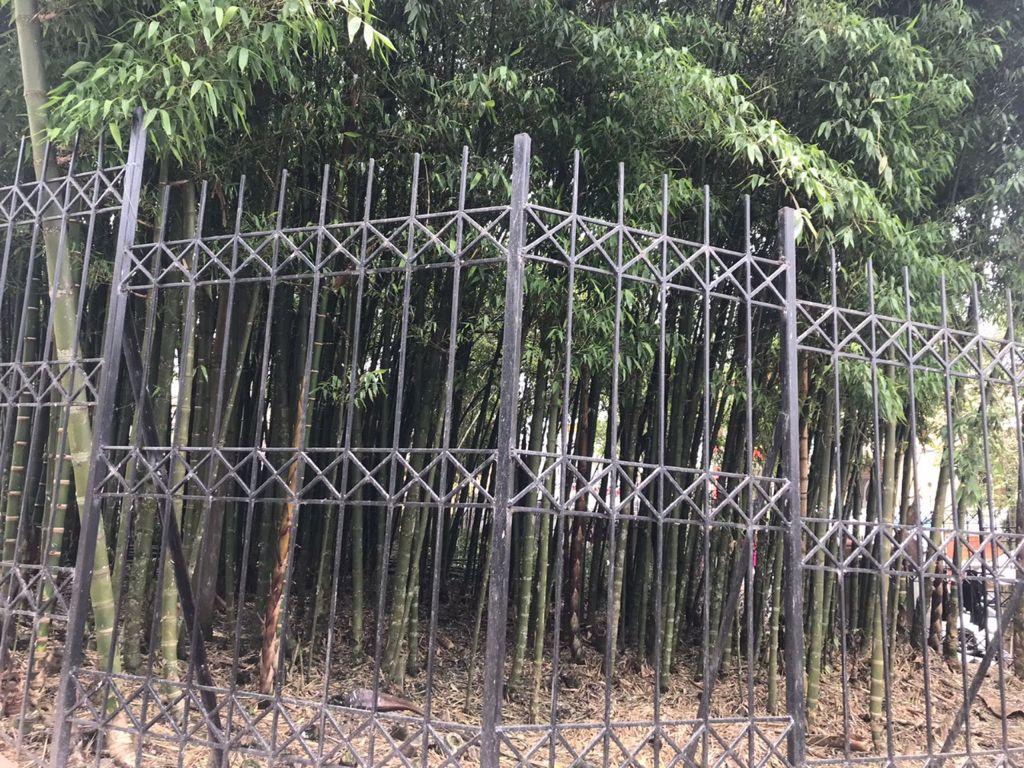 Secretaría de Medio Ambiente de Manizales autorizó el mantenimiento silvicultural del guadual ubicado en el Parque Caldas